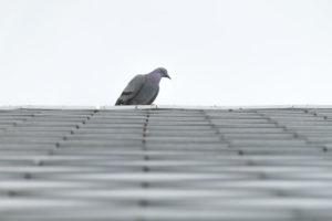 Pigeon roofing deterent system